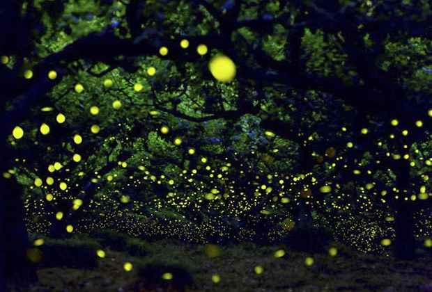 Lugares con luz propia de noche portal inmobiliario de for Espectaculo de luciernagas en tlaxcala