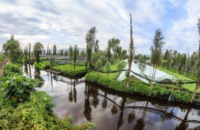 Recuperan 26 kilómetros de canales en zona chinampera de Xochimilco