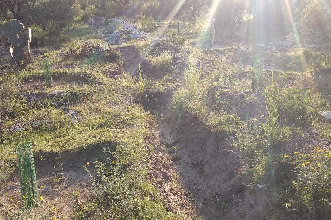 Conafor reforesta 91% de superficie proyectada en Aguascalientes