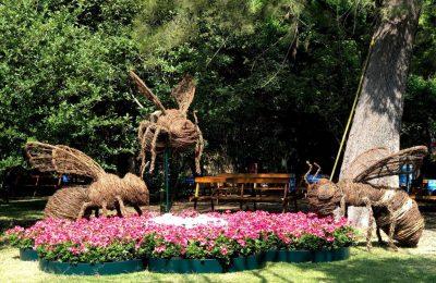 FYJA inundó de color el Jardín Botánico de la CDMX