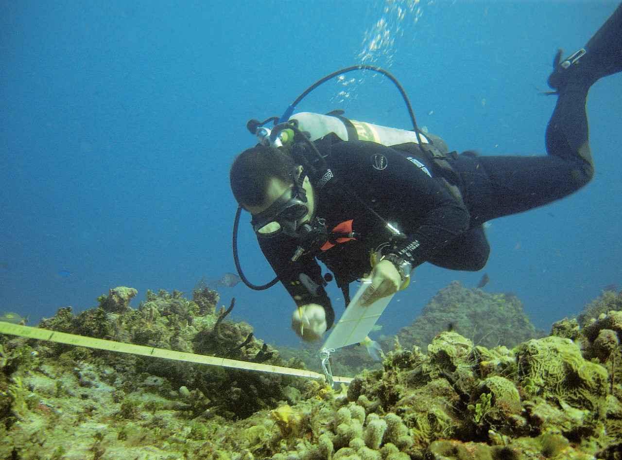 Premian a biólogo mexicano por estudios sobre arrecifes