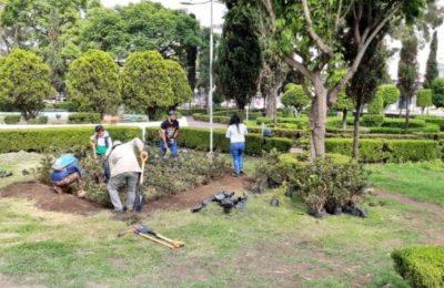CDMX se une al Reto Verde para revegetación de la zona urbana
