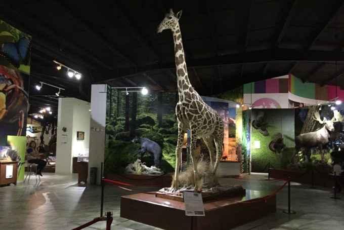 Construyen cuatro museos de Historia Natural en el Edomex