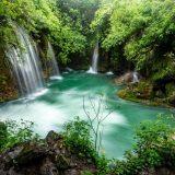 Día Mundial del Medio Ambiente, por la restauración de los ecosistemas