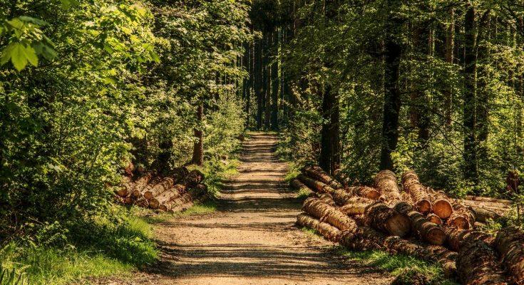 edomex-anuncia-reapertura-de-parques-zoologicos-y-areas-protegidas