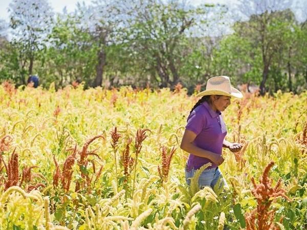 En México, solo 3 de cada 10 mujeres son propietarias de tierra