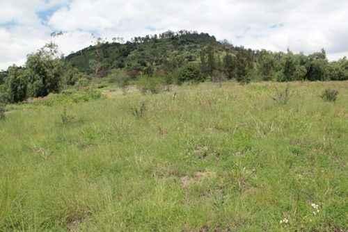 Iztapalapa alista plan de reforestación  para el Cerro de la Estrella 2