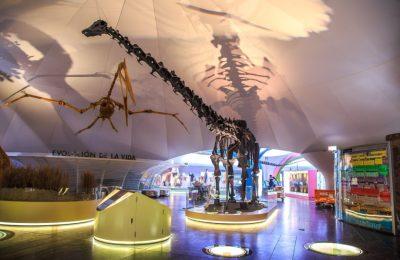Museo de Historia Natural renovó su estructura y bóvedas