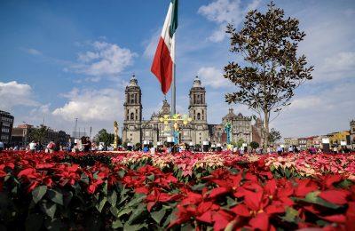 Reinstalan el Jardín Cultural de la CDMX con 11,000 nochebuenas