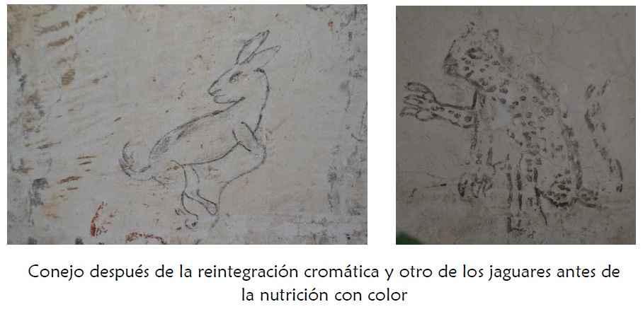Rescate y restauración de los jaguarcitos de Zacatlán de las Manzanas 7