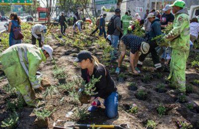 Reto Verde llega a San Jerónimo, siembran 6,000 plantas en camellón