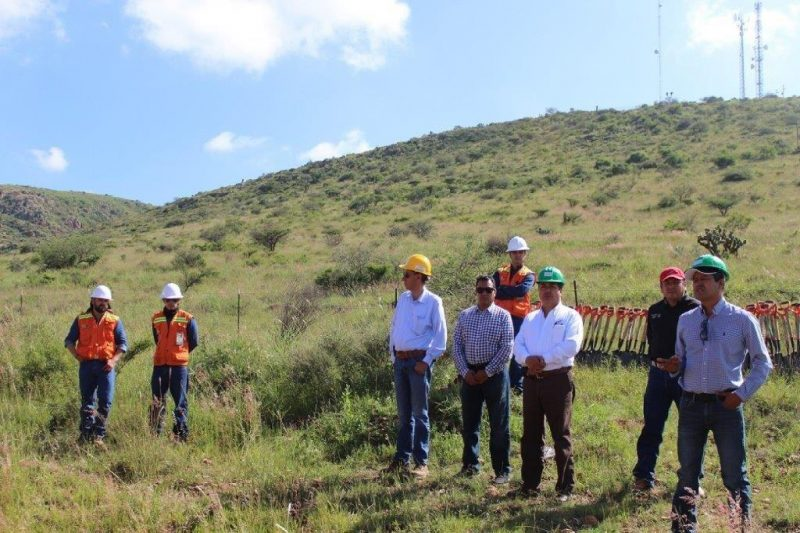 Conafor restaura100 hectáreas del cerro Pico del Águila en Zacatecas