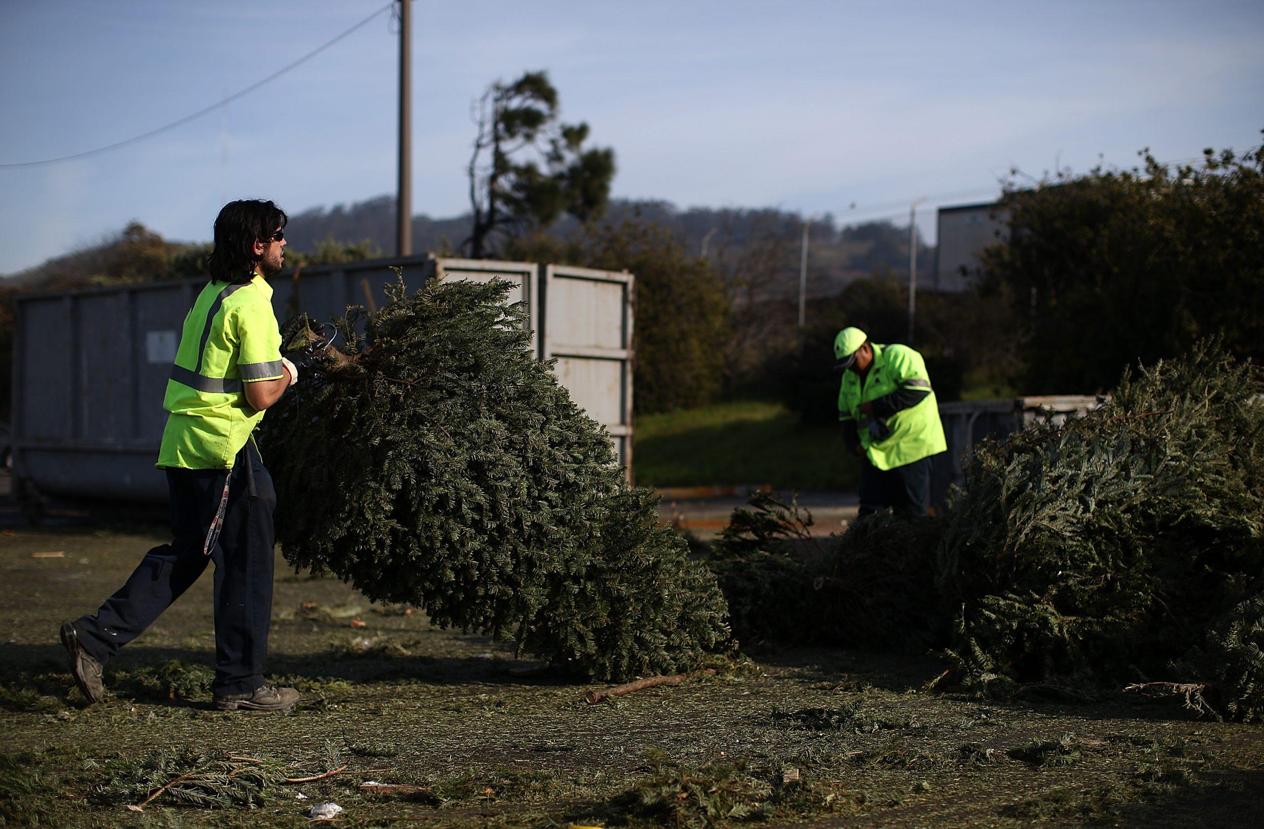 Árbol de Navidad, ¿qué hacer con él?
