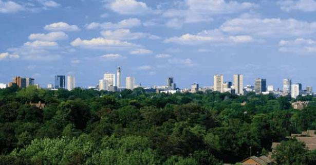 Publican guía para árboles en la ciudad