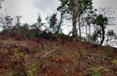Profepa detuvo las obras de un hotel en Cuetzalan