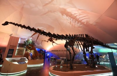 Modernizan Museo de Historia Natural