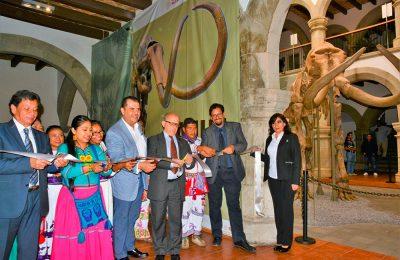 Se exhibirán restos de mamut en Museo Regional de Nayarit