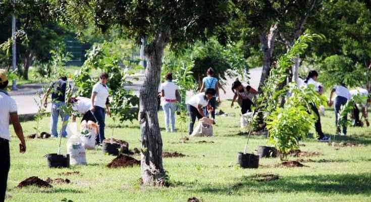 Buscan mejorar áreas verdes en Mérida
