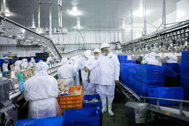 Invertirán 200 mdp en empresa avícola en Yucatán