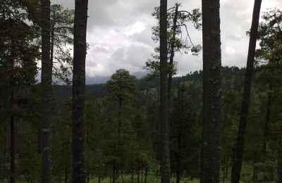 Continúan con trabajos de reforestación en el Estado de México